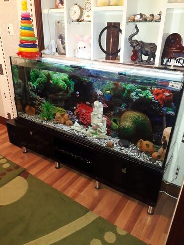 Akvarium 25 derinliyi 150eni 60hundurluyu.Qiymeti 350azn.Unvan