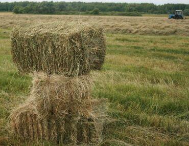 вулканизация оборудование цена в Кыргызстан: Продаю сено в тюках. Чоп сатылам. Первый укос. Только звонить
