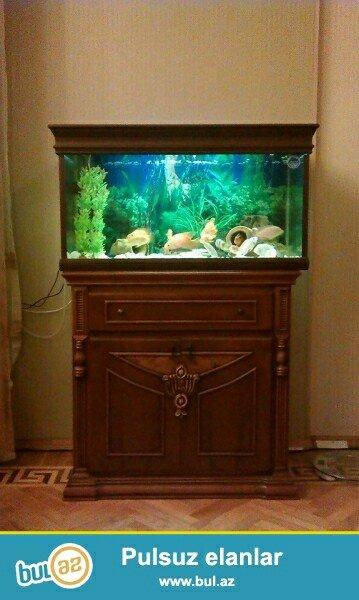 Bakı şəhərində butun ölçü ve formada akvarium sifariwleri qebul olunur