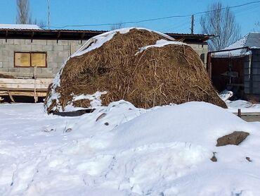 Бирдик матрица - Кыргызстан: Эндей чоп беде тел