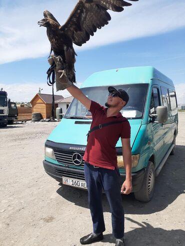 купить спринтер в германии в Кыргызстан: Ищу работу водителем с бусом Спринтер