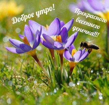 Срочно нужен фармацевт можно без опыта в Бишкек