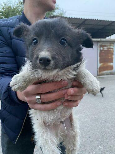 Животные - Кыргызстан: Эти 4 малышей - 2 девочки и два мальчика могут спокойно жить в