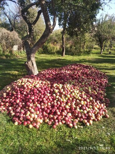 115 объявлений: Овощи, фрукты
