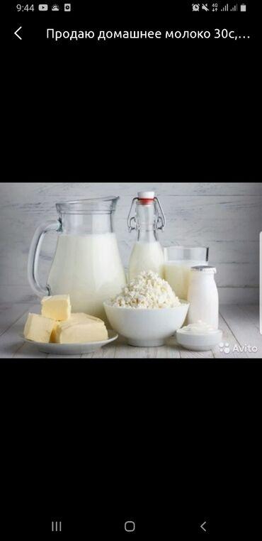 Молочные продукты и яйца - Кыргызстан: Продается домашнее молоко