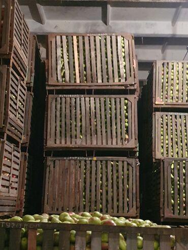 контейнер 40 тонн в Кыргызстан: Продам  грушу оптом  талгарка ; лесная краса 40-50 тонн