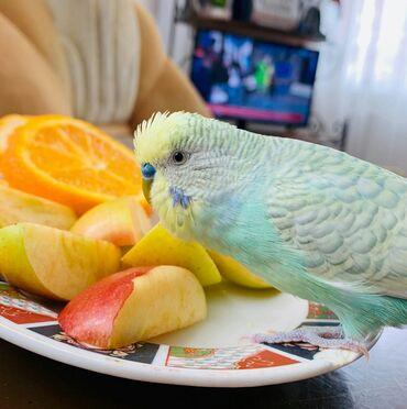 Попугаи разных цветов и возрастов. Наша птица получает все