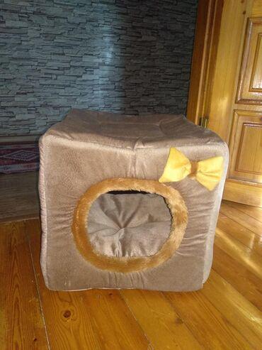 yuva - Azərbaycan: Pisik üçün yuva/ дом для кота