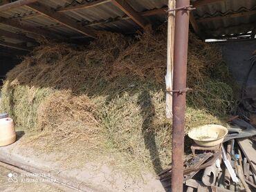 Другие животные - Беловодское: Беде чоп сатылатпрестесе 130 прес чыгат баасы 15000 мин сом