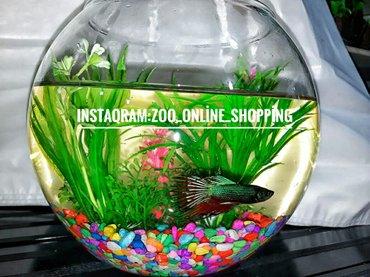 Yumru akvarium Icinin dekoru+ BALIQ Cemi 45 Azn. Sevdikleriniz ucun go в Баку
