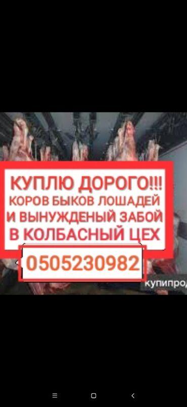С/х животные - Кыргызстан: Куплю | Лошади, кони | На забой, на мясо