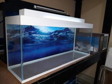Bakı şəhərində Teze hazirlanip akvarium uzunu 70sm su tutumu 42 litre