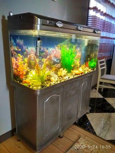 """Аквариумы в Кыргызстан: Продаются два аквариума заводские,фирмы""""JEBO"""",300л каждый,размер"""