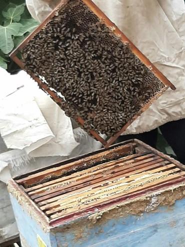 Heyvanlar - Qazax: Ari aileleri satılır yeşikle bir yerde 200 manat sortu yaxsı tam