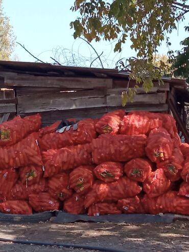 220 объявлений   ЖИВОТНЫЕ: Продаю кукурузу прошу Московский район село Ак-Торпок срочно есть