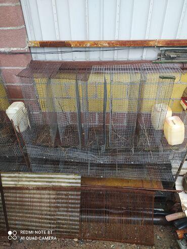 Клетки и инкубатор для разведения перепелок, перепёлка