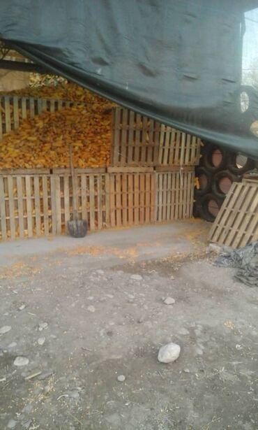 акриловые краски для ванны цена в Кыргызстан: Продаю кукурузу в качанах