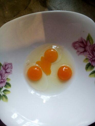 Продукты питания - Ак-Джол: Яйцо перепелиное. Домашнее. Экологически чистое. Без антибиотиков и