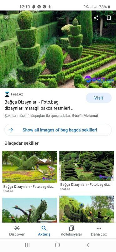 - Azərbaycan: Bagban İsi Axtariram Adim Qardasxan 49 Yasim Var Bakida Oluram Butun