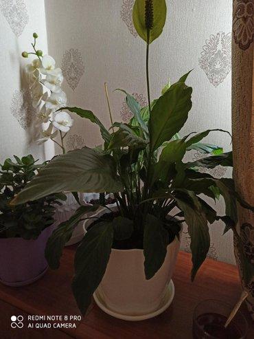 цветы комнатные много в Кыргызстан: Продается квартира: 3 комнаты, 65 кв. м