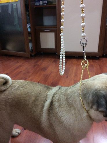 Ринговка поводок для собаки жемчуг золото в Бишкек