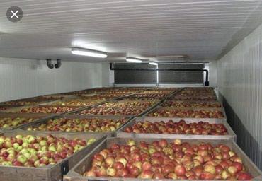 Холодильник для хранения овощей и в Лебединовка