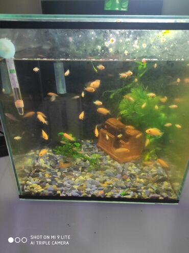 Продаю мальков цихлид можно с аквариумом