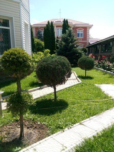 Обработка хвойных и плодовых деревьев в Бишкек