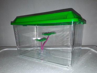 Bakı şəhərində Kicik su tisbagalari ucun akvarium plasmasdir