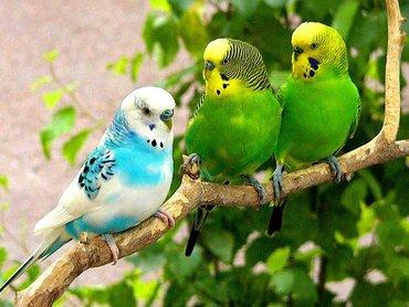 Волнистые попугаи Клетки Корм Поилки