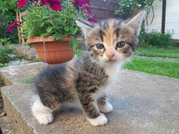 Продаю котят  Возможно с доставкой
