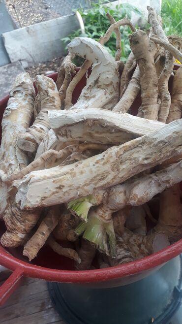 Продукты питания - Ак-Джол: Продаю корни хрена