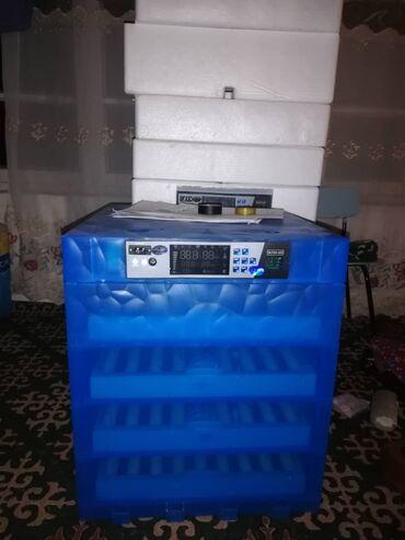 256 жумурткалуу Инкубатор, полный автомат