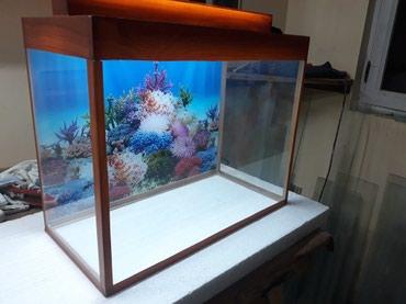 Bakı şəhərində Teze akvarium 30azn 50 litrelik qapaqi var qapaqinda iwiq yeri var