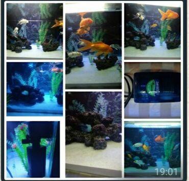 Akvarium satilir.70/42/37 ölcüde.120_130litr su hecmli.arxa fon