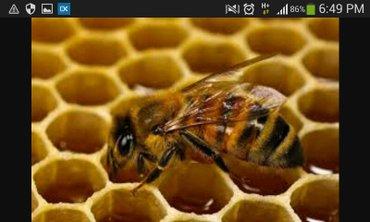 мед в Кара-Балта