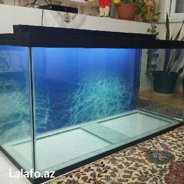 Bakı şəhərində akvarium 325 litrelik teze hazirlanip 10 mml wuwenin qalinliqi uzunu 1