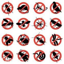 Preduzece eko efekt global d. O. O bavi se: dezinsekcijom (unistavanje - Beograd