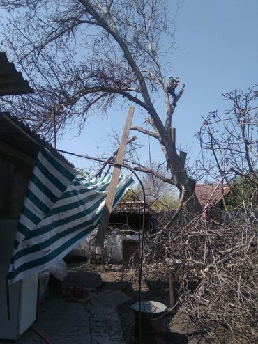 Биик Терек коркунучту бактарды кыявыс