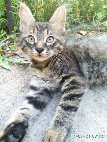 Отдам котят в добрые руки. Родились 14 мая. К лотку приучены, игривые