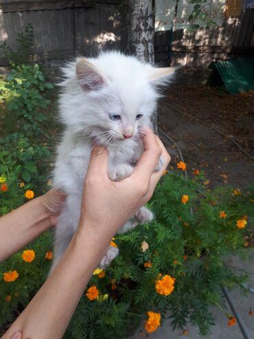 skidki na futbolki в Кыргызстан: Продаю котят, мальчик и девочка