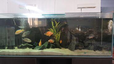 ходунки рыбки в Кыргызстан: Продаю аквариум без тумбы. Готовый, со всем содержимым: рыбки, песок