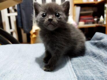 Животные - Кировское: Котики ищут любящих и заботливых хозяев! 2 месяца, но уже приучены к