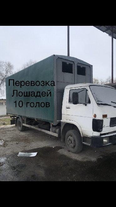 такси транспортные услуги перевозки в Кыргызстан: Перевозка лошадей и скота