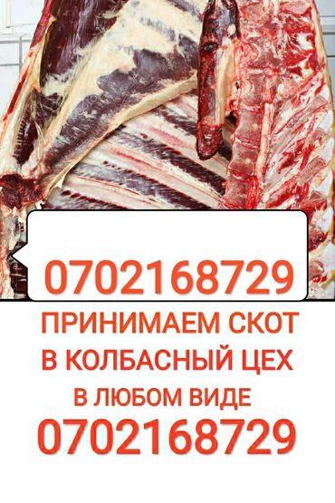 Скупка в колбасный цех коров лошадей тёлок бычков и вынужденый забой