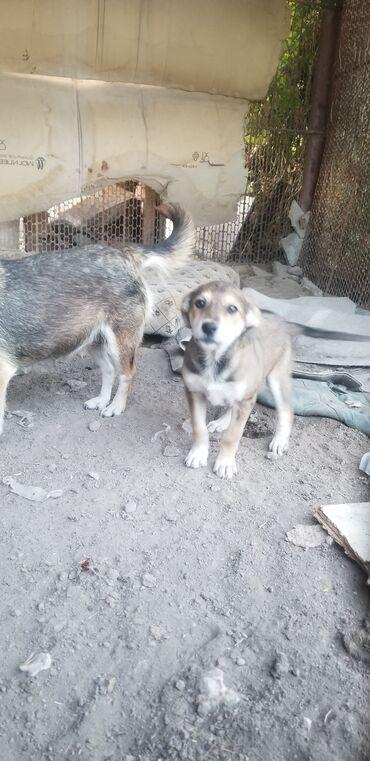 Отдадим собаку и ее щенка, обе девочки, собаки не большие отличные