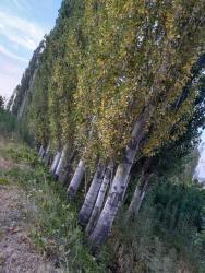 газонокосилка электрическая bosch в Кыргызстан: Балки | Листовые деревья