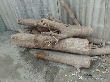 Kömür odun - Azərbaycan: Odun.Tut ağacı