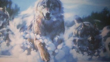 "Картина ""волки"" размер 60х90 0777491416, 0554491416 в Бишкек"