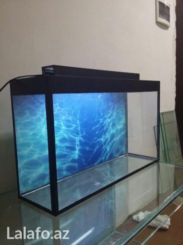 Bakı şəhərində Teze akvarium uzunu 70sm hundurluyu 45 sm eni 20sm  qapaqi var